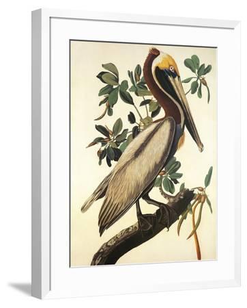 Brown Pelican-John James Audubon-Framed Premium Giclee Print