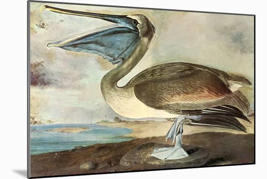 Brown Pelican-John James Audubon-Mounted Premium Giclee Print