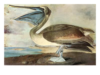 https://imgc.artprintimages.com/img/print/brown-pelican_u-l-pgf4u40.jpg?p=0