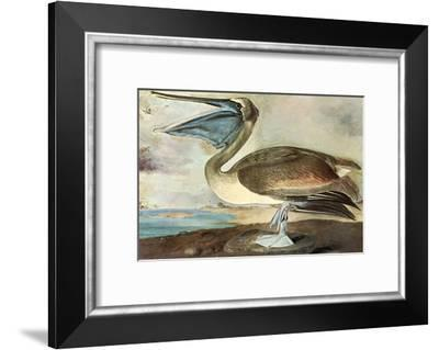 Brown Pelican-John James Audubon-Framed Art Print