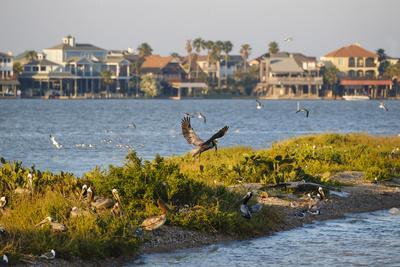 https://imgc.artprintimages.com/img/print/brown-pelicans-pelecanus-occidentalis-in-flight_u-l-q1d2kw20.jpg?p=0
