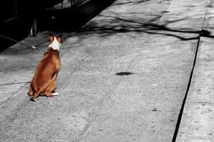 Brown & White Dog on Black & White Street