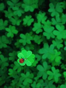 Ladybug on Four Leaf Clover by Bruce Burkhardt