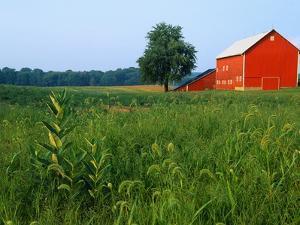Red Barn in Green Field by Bruce Burkhardt