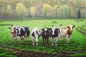 Curious Cows by Bruce Dumas