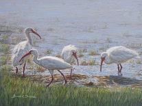 Nantucket Bloom-Bruce Dumas-Giclee Print