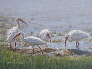 Ibis Excursion by Bruce Dumas