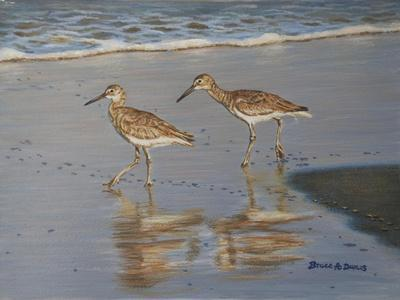 Shore Walkers