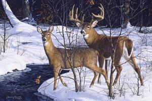 Zone 2 Whitetails by Bruce Miller