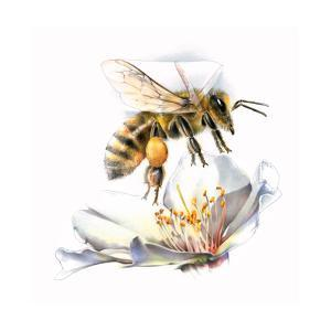 A Painting of a Honeybee's Beating Wings by Bruce Morser