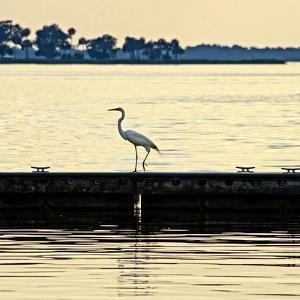 Along the Pier by Bruce Nawrocke