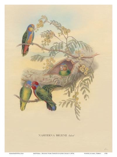 Bruijns Pygmy Parrots (Nasiterna Bruijnii, Salvad)-John Gould-Art Print