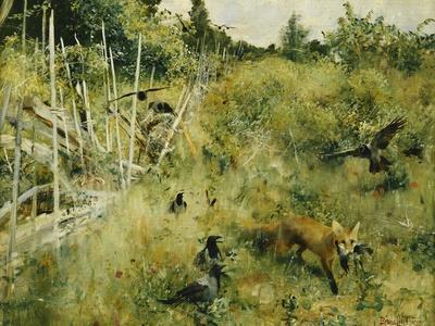 A Fox Taking a Crow; Rav Och Krakor, 1884