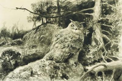 Berguv (Eagle Owl) Bubo Bubo, 1894