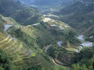 Banaue Terraced Rice Fields, UNESCO World Heritage Site, Island of Luzon, Philippines by Bruno Barbier