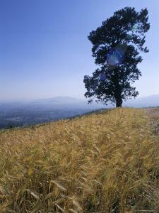 Barley Field on the Slopes of Entoto, Shoa Province, Ethiopia, Africa by Bruno Barbier