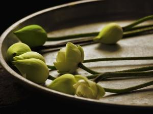 Lotus buds in offering plate at Ayuthaya in Thailand by Bruno Ehrs