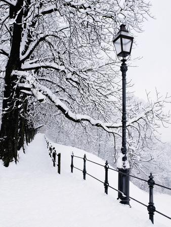 Trees and lamp post in snow