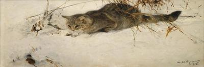 A Cat Stalking a Mouse in the Snow