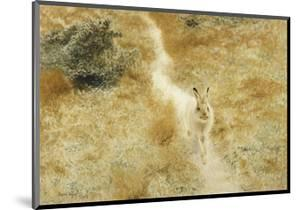 A Winter-Hare in a Landscape by Bruno Liljefors