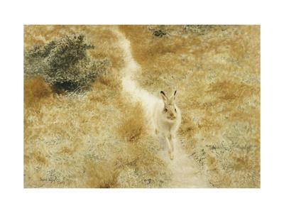 A Winter-Hare in a Landscape