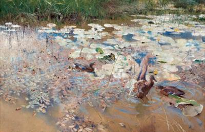 Wild Ducks, 1887
