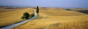 Road Running Through Open Countryside, Orcia Valley, Siena Region, Tuscany, Italy by Bruno Morandi