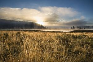Golden Morning Light On The Yellowstone River In The Hayden Valley, Yellowstone National Park by Bryan Jolley
