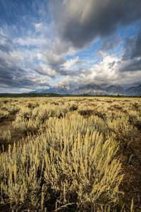 Sagebrush And Sky In Grand Teton National Park by Bryan Jolley