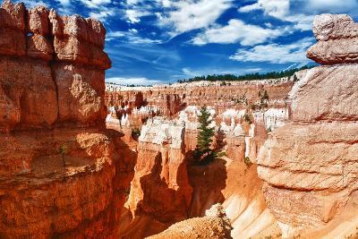 Bryce Amphitheater - Utah - Bryce Canyon National Park - United States-Philippe Hugonnard-Photographic Print
