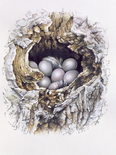 Bubo Bubo (Barn Owl), 2001-Sandra Lawrence-Giclee Print