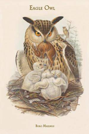 Bubo Maximus - Eagle Owl-John Gould-Art Print