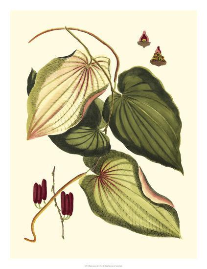 Buchoz Leaves III--Giclee Print