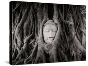 Buddha Head in the Roots of a Tree, Wat Mahathat, Ayutthaya Historical Park, Ayutthaya, Thailand