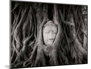 Buddha Head in the Roots of a Tree, Wat Mahathat, Ayutthaya Historical Park, Ayutthaya, Thailand