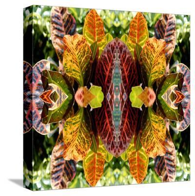 Buddha in the Leaves-Rose Anne Colavito-Stretched Canvas Print