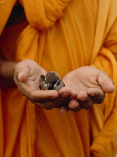 Buddhist Monk in a Saffron Robe Holding a Baby Bird in His Hands-xPacifica-Photographic Print