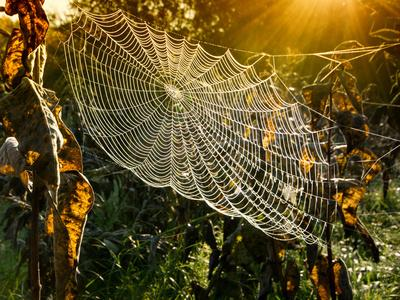 Strings of a Spider's Web in Back Light in Forest