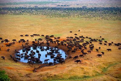Buffalo at the Source-Andrzej Kubik-Photographic Print