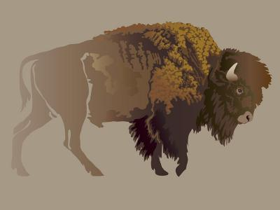 Buffalo. Hand-Drawn Illustration, Detailed Variant.- imagewriter-Art Print