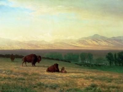 https://imgc.artprintimages.com/img/print/buffalo-on-the-plains-c-1890_u-l-pcg29a0.jpg?p=0