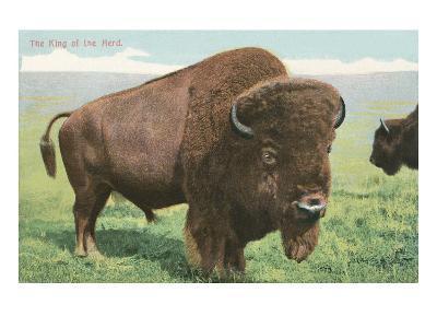 Buffalo on the Range--Art Print