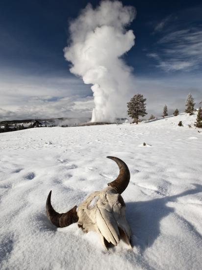 Buffalo Skull and Old Faithful Geyser-Douglas Steakley-Photographic Print