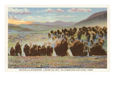 Buffalo Stampede, Yellowstone National Park--Art Print