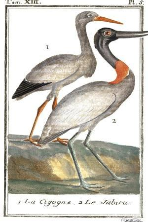 Buffon Cranes & Herons I