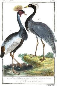 Buffon Cranes & Herons II by Buffon