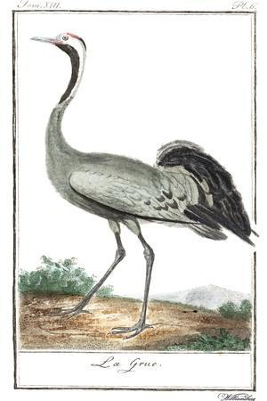 Buffon Cranes & Herons IV
