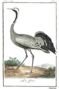 Buffon Cranes & Herons IV by Buffon