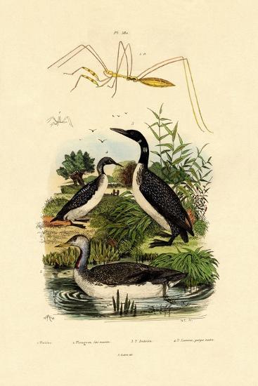 Bug, 1833-39--Giclee Print