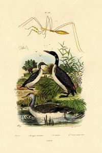 Bug, 1833-39